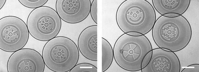 마이크로입자에 각각 다른 모양을 새겨 넣은 모습. 분석하고자 하는 병원균과 결합되면 형광으로 빛나 감염 여부를 파악할 수 있다. - 한국과학기술연구원 제공